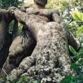 ボマルツォの怪物庭園 Parco dei Mostri (bomarzo) 5